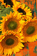 Floral Framed Prints - Bunch of sunflowers Framed Print by Garry Gay