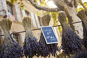 Languedoc Framed Prints - Bunches Of Lavender Hang From A Pole Framed Print by Taylor S. Kennedy