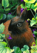 Violets Drawings - Bunny and Violets ACEO by Valerie  Evanson