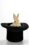 Magic Hat Photos - Bunny In Black Hat by American Images Inc