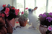 Rabbits Prints - Bunny in window Print by Garry Gay