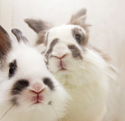 Close Up Photos - Bunny Pals by Jenni Holma