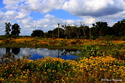 Florida Prints - Burmarigold Bliss Print by Barbara Bowen