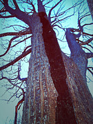Sky Fire Prints - Burned Trees 8 Print by Irina  March