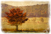 Leaf Change Prints - Burning Bush Print by Debra and Dave Vanderlaan