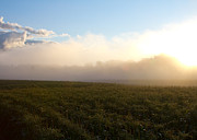 Sweet Corn Farm Prints - Burning Fog Print by Tim  Fitzwater