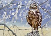 Eagle Painting Framed Prints - Burrowing Owl Framed Print by David Lloyd Glover