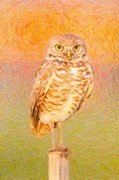 Impasto Photo Posters - Burrowing Owl Impasto Poster by Clarence Holmes