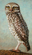 James W Johnson Drawings Prints - Burrowing Owl Print by James W Johnson