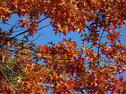 Bluesky Photo Prints - Burst of Fall Print by Lynette McNees