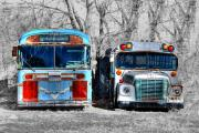 Vintage Buses Photos - Bus Graveyard by Don Wolf