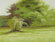 Bush Pastels - Bush and Brush by Bruce Richardson
