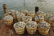 Etc. Photos - Bushel Baskets Of Clams On A Pier by Medford Taylor