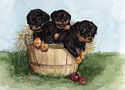 Puppies Originals - Bushel of Rotty Pups  by Nancy Patterson