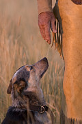 Cattle Dog Prints - Buster and Dawg Print by Carol Walker