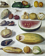 Banana Art Prints - Bustos: Still Life, 1874 Print by Granger