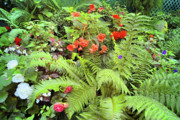 Garden Flowers Photo Originals - Butchart Gardens 2 by Lawrence Christopher