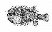 Porcupine Fish Drawings - Buteteng Laot 1  Porcupine Fish 1 by Zeus Paredes