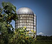 Brenda Giasson - Butterfield Farm