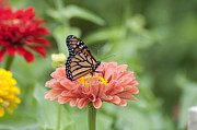 Garden - Butterflies and Blossoms by Bill Cannon