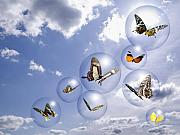Flying Photos - Butterflies and bubbles by Tony Cordoza