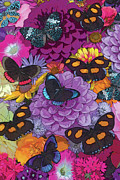 Insects Painting Framed Prints - Butterflies and Flowers 2 Framed Print by JQ Licensing