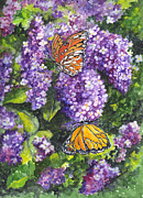 Lilac Drawings Posters - Butterflies and Lilacs Poster by Carol Wisniewski