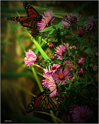 Mikki Cucuzzo Metal Prints - Butterflies and wildflowers Metal Print by Mikki Cucuzzo