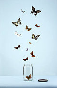 Bottle Cap Posters - Butterflies Escaping From Jar Poster by Martin Poole