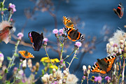 Medium Group Of Animals Posters - Butterflies Sitting On Flower Poster by www.WM ArtPhoto.se