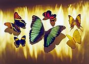 Idea Photos - Butterflies by Tony Cordoza