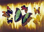 Butterflies Print by Tony Cordoza