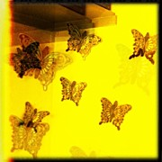 James Roberts - #butterflies #yellow...