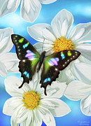 Song Birds Metal Prints - Butterfly 2 Metal Print by JQ Licensing