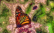 Cactus Fruit Prints - Butterfly Abstract  Print by Elaine Manley