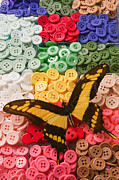 Butterfly Photo Posters - Butterfly and buttons Poster by Garry Gay