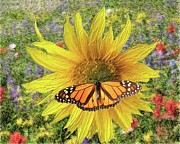 Impasto Oil Digital Art - Butterfly and Sunflower by Richard Stevens