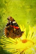 Gelb Posters - Butterfly Poster by Angela Doelling AD DESIGN Photo and PhotoArt