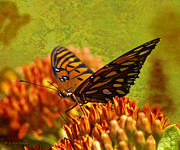 Butterfly Digital Art Posters - Butterfly At Ease Poster by J Larry Walker