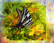 Butterfly Digital Art Posters - Butterfly Beauty Poster by J Larry Walker