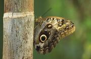 Butterfly Print by Bilderbuch