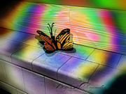 Bill Alexander Acrylic Prints - Butterfly Acrylic Print by Bill Alexander