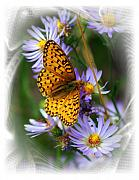 Marty Koch Prints - Butterfly Bliss Print by Marty Koch