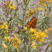 Sierras Photos - Butterfly Brunch by Bonnie Bruno