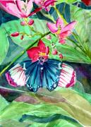 Franklin Drawings Framed Prints - Butterfly Buffet Framed Print by Mindy Newman