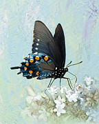 Pipevine Swallowtail Butterfly Prints - Butterfly Candy Print by Betty LaRue