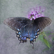 Pipevine Swallowtail Butterfly Prints - Butterfly Dance Print by Betty LaRue