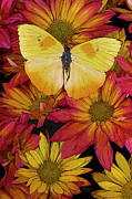 Colorful Photography Painting Framed Prints - Butterfly Detail Framed Print by JQ Licensing