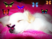 Puppy Digital Art - Butterfly Dreams  by Megan Miller