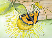 Insects Drawings Framed Prints - Butterfly Framed Print by Eva Ason